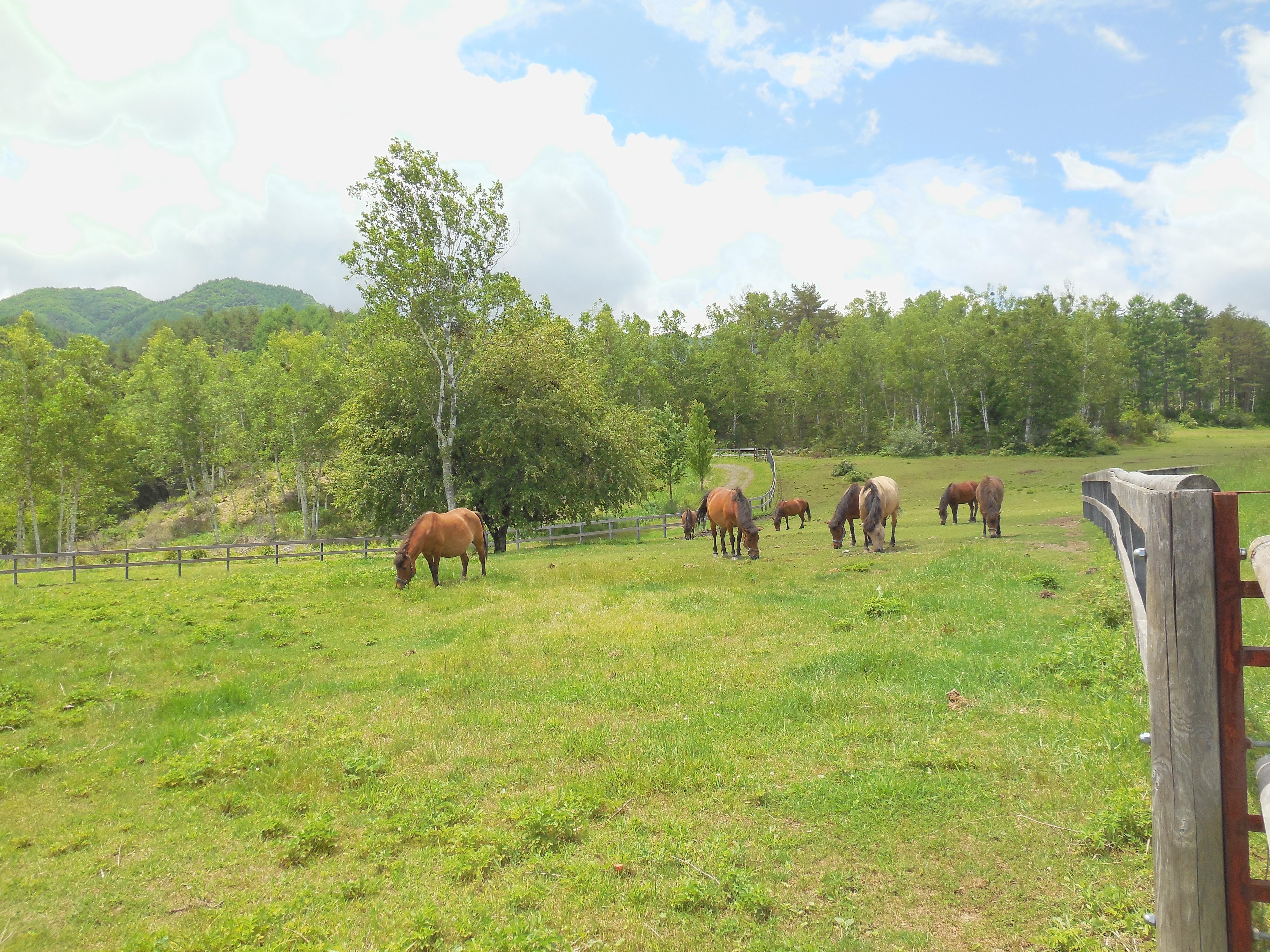 木曽馬の里(15km)
